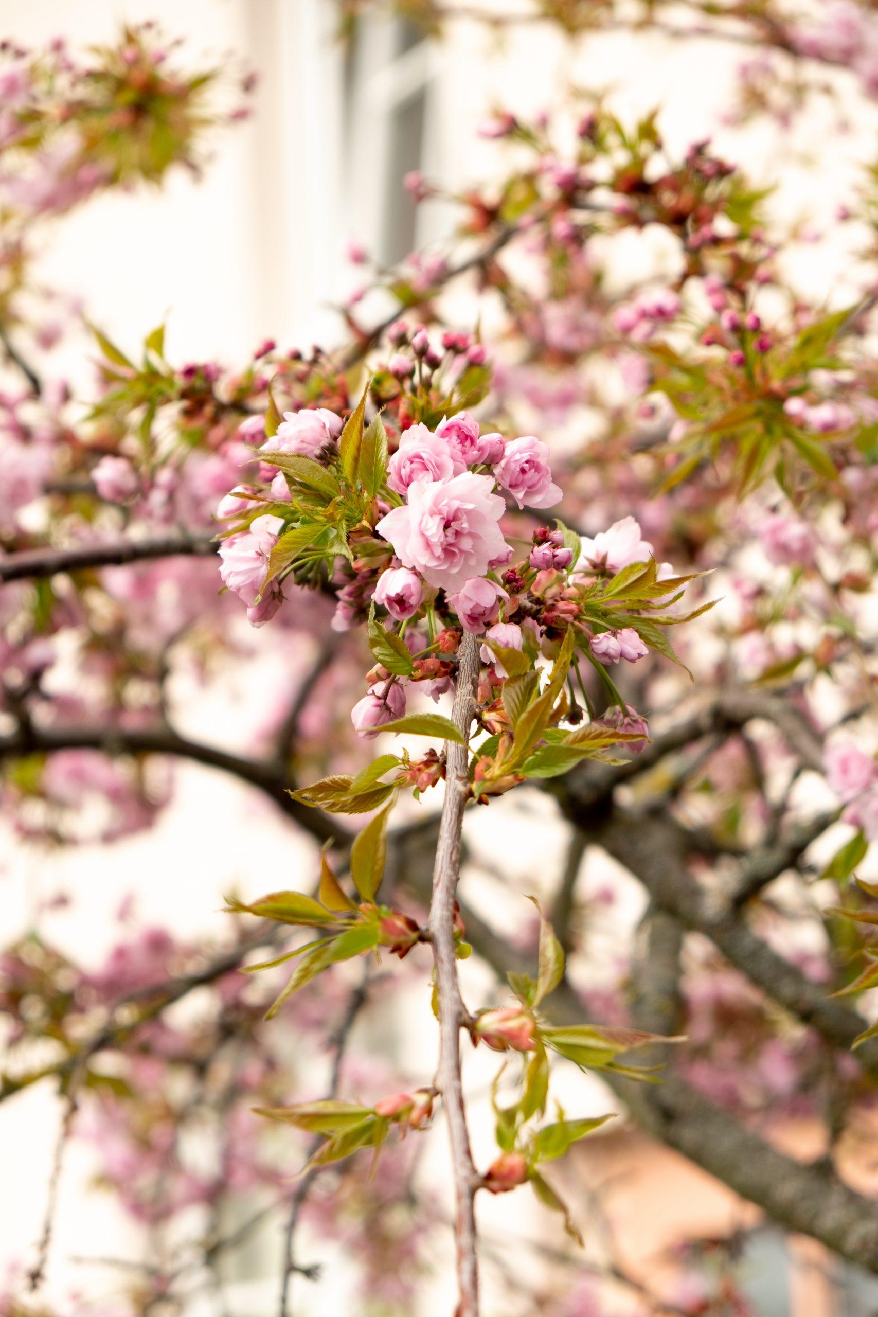 April in Flowers II
